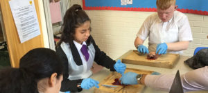 Dissecting hearts in Science